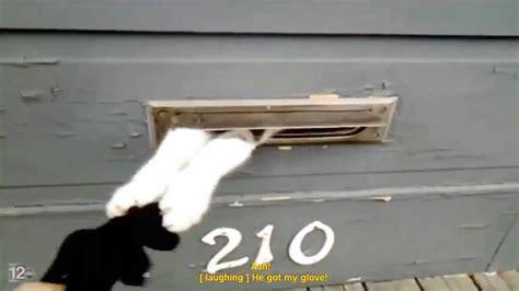 Mailman Vs Cat