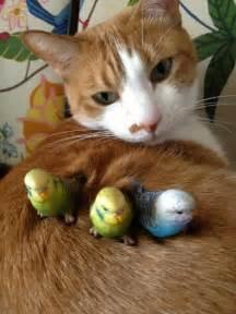 bird for cats cat and bird friends pixdaus