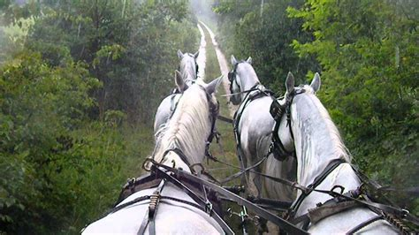 carrozze con cavalli gita con carrozze a cavalli 2 www realfriuli it