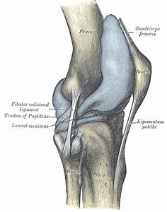 Knee Joint Anatomy | Bone and Spine