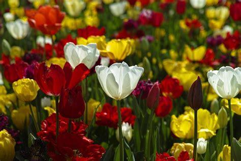 plantas arboles  flores vocabulario guia estudio