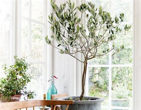 32 Beautiful Indoor House Plants That Are Also Easy To Maintain : Beautiful House Plants