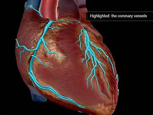Serious As A Heart Attack  7 Facts About Cardiovascular