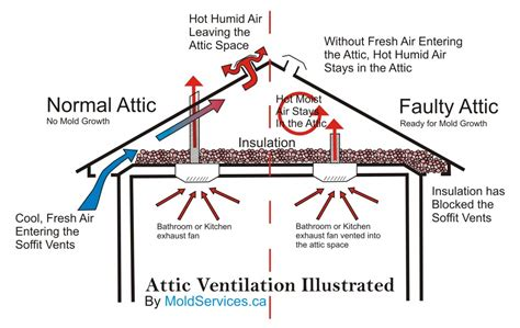 atticventilationillustrated  mold guy