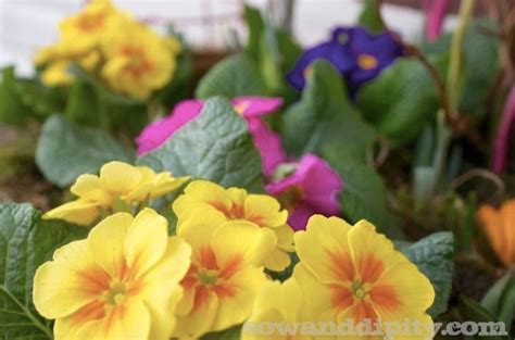 hometalk forgot  plant  spring bulbs