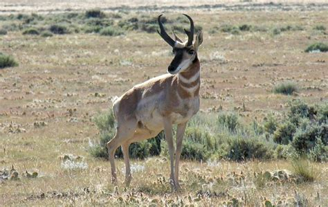 western hunting forecast   hottest spots  deer