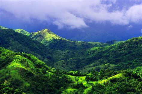 ป่าไม้เเละธรรมชาติ: ป่าไม้เเละธรรมชาติ
