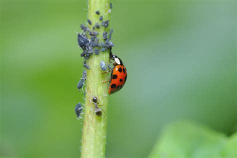 Agriculture For Impact Integrated Pest Management