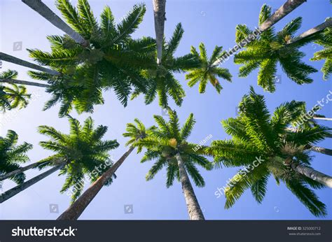 de brazil palm gardens avenue of royal palm trees at the jardim botanico