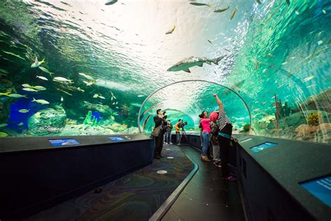 ripley s aquarium of canada amazing photos you can t miss places boomsbeat