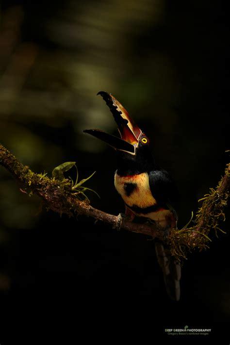 multiple award winning nature photographer
