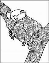Koala Coloring Adult Animal Printable Adults Already sketch template
