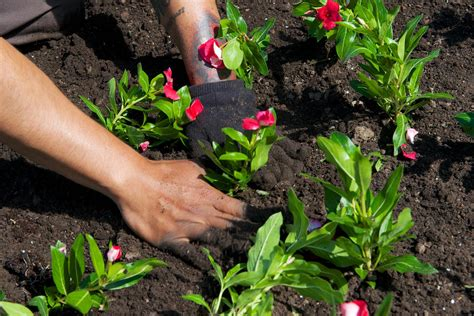 gardening workshop highlife magazine