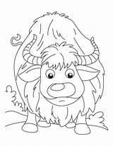 Yak Coloring Template Sketch sketch template