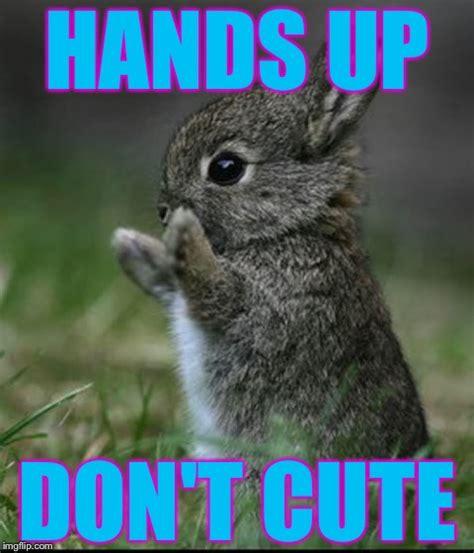 Cute Easter Meme - cute bunny imgflip