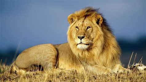 los mejores animales animales salvajes