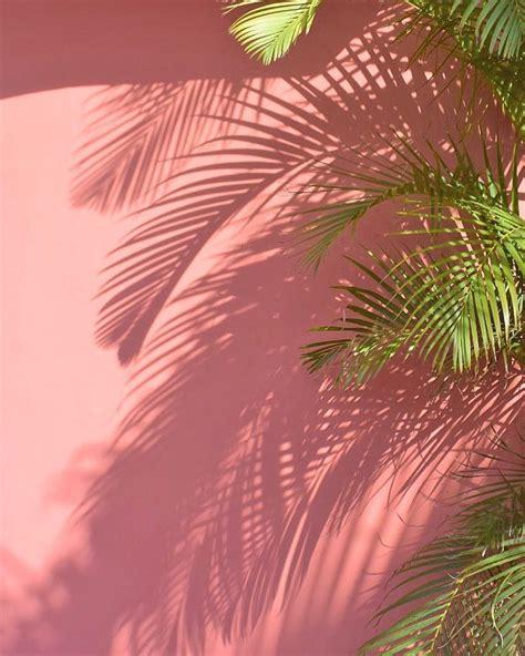 pin oleh dwipara  daun latar belakang fotografi