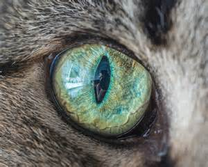 cats eye cat eye macro photos will hypnotize you