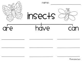 insects worksheet second grade insect unit things pinterest insects and worksheets