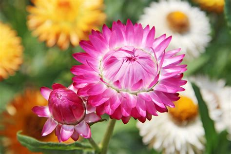 Augu kompozīcijas vēlā rudenī - iespējams, dārzā joprojām ...