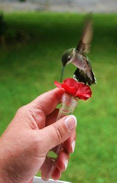 1000 images about hummingbirds clipart on pinterest