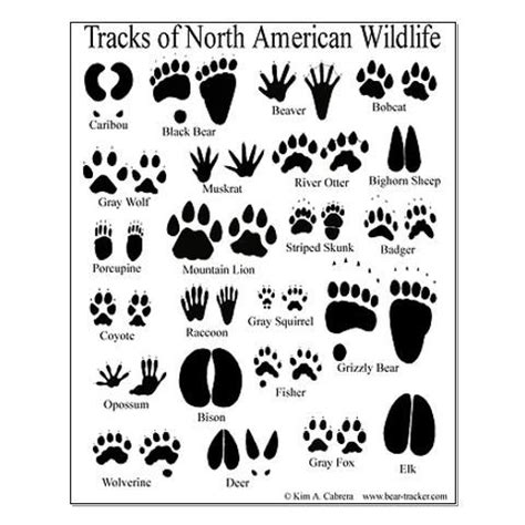 animal tracks guide posters kids party animal