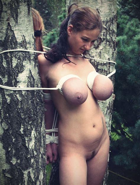 Tied Between Two Trees Porn Photo Eporner