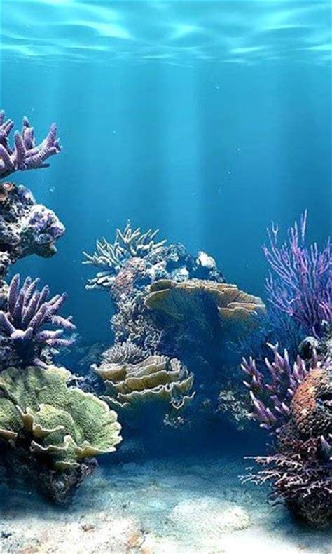 coral reef screensavers wallpaper wallpapersafari
