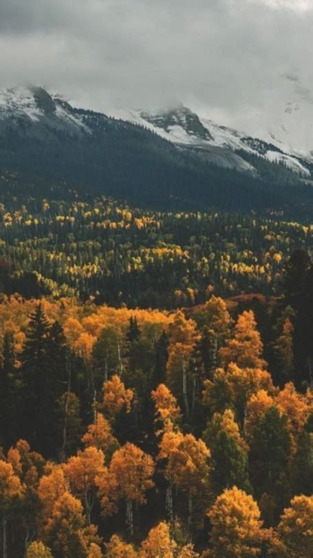 Aesthetic Simple Fall Iphone Wallpaper by Fall Wallpaper On