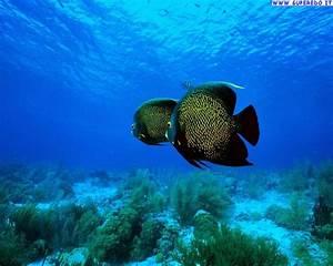 Sfondi Pesci Tropicali • 50 Sfondi in alta definizione (HD)