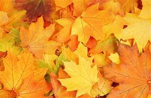 autumn leaves textures, download photo, background ...