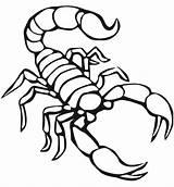 Scorpion Coloring Printable Animals Preschool Scorpions Animal Drawing Reptiles Colorings Getdrawings Crafts Worksheets Preschoolcrafts sketch template
