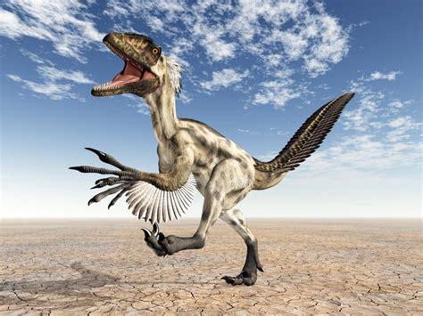 What Did The Raptor Dinosaur Habitat Look Like Plus 11