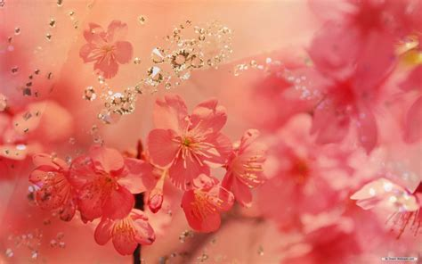750x1334 beautiful 3d flower cg free wallpaper free flower wallpaper cg flowers