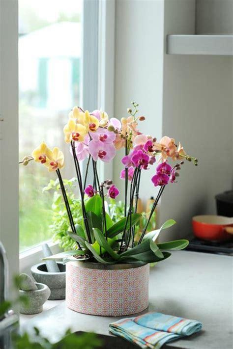 les fleurs d int 233 rieur les orchid 233 es en 40 images comment et d 233 coration