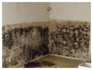 mold proof drywall mold drywall photos