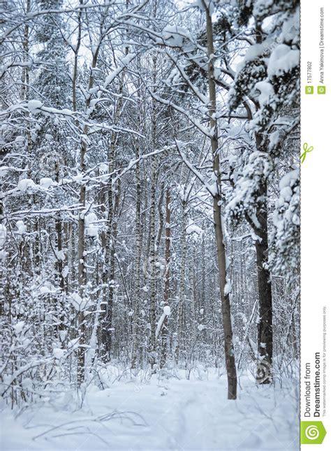 woodland snow scene stock photo image  rustic flora