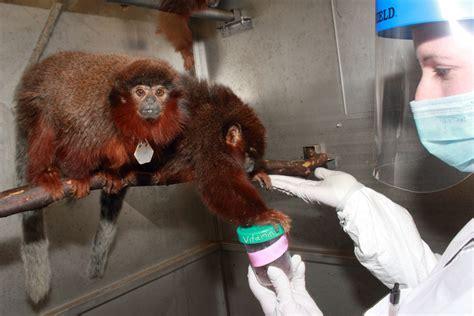 animals california national primate research center