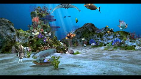 amazingly beautiful  aquarium  wallpaper wallpaper