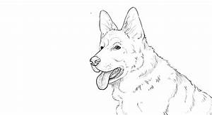 How To Draw German Shepherd Dog Youtube