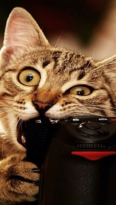 Funny Cat Iphone 6  6 Plus And Iphone 54 Wallpapers