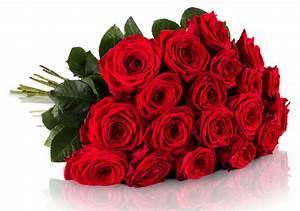 Begleitpflanzen Für Rosen : 20 rote rosen f r 19 bei miflora red naomi ~ Orissabook.com Haus und Dekorationen