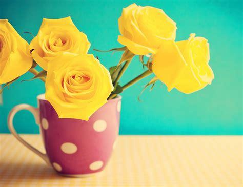 fondos de pantalla rosas amarillo taza grande flores