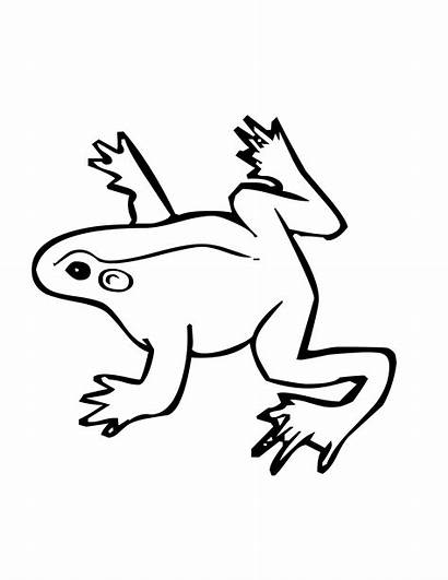 Frog Coloring Pages Jumping Drawing Tree Poison