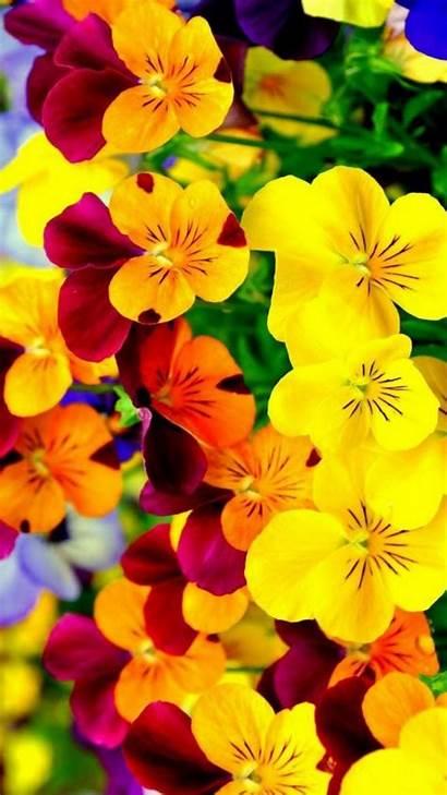 Flower Iphone Wallpapers Fall Pantalla Fondo Desktop