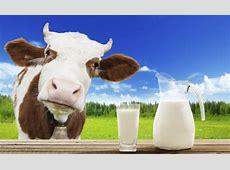 Las falsas teorías sobre la leche y los productos lácteos