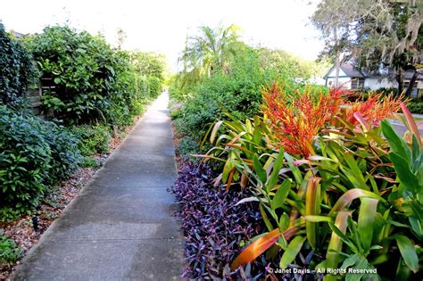 selby botanical gardens janet davis explores colour in the garden the world