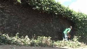 Comment Tailler Une Haie De Laurier : la main verte rabattre une haie youtube ~ Melissatoandfro.com Idées de Décoration