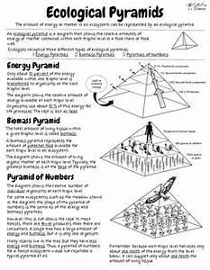 Worksheet Ecological Pyramid Worksheet Grass Fedjp Worksheet Study Site