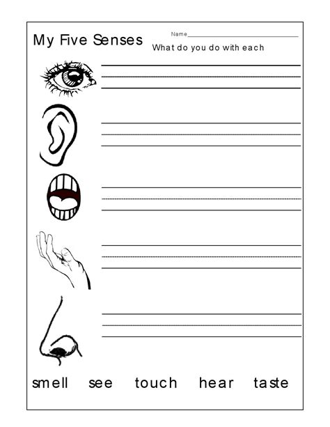 five senses kindergarten worksheets the five senses
